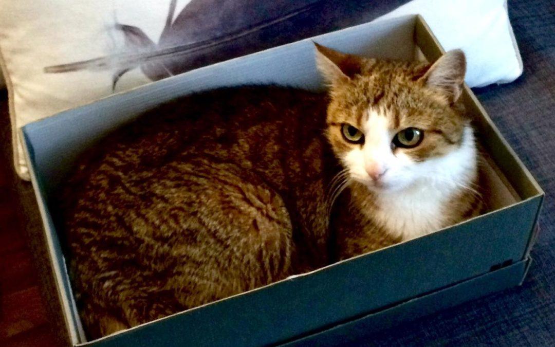 Katze mit chronischem Nierenversagen
